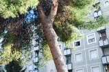 isveur giardinetti l'albero