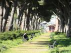 Viale alberato Via Chiodelli (2) - Ambra