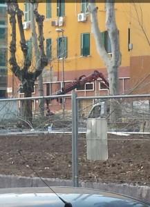 Riqualificazione Piazza Quarticciolo (2)