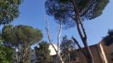 i-pericolosi-pini-potati-il-giorno-della-commissione-del-14-febbraio