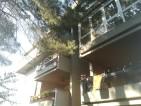 alberi-e-palazzi