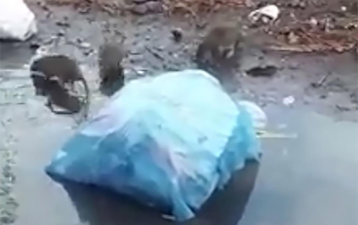 mouse-okokok